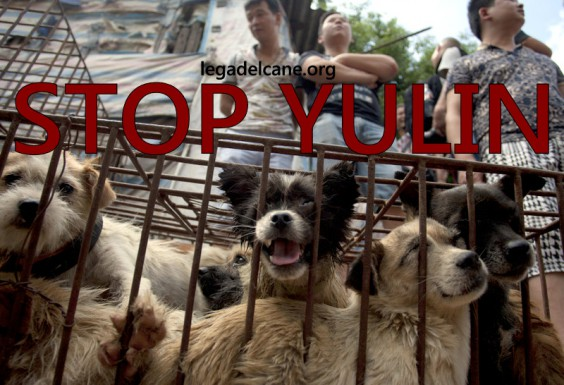 Il massacro di Yulin