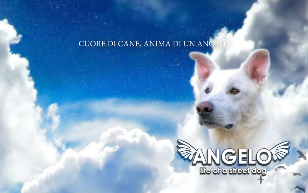 Angelo – Life of a street dog, il trailer